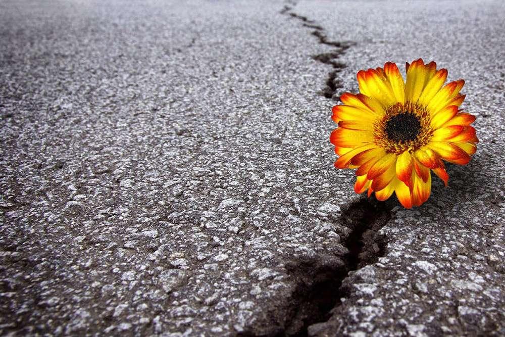 Resiliência emocional: como ela afeta seu sucesso no trabalho?